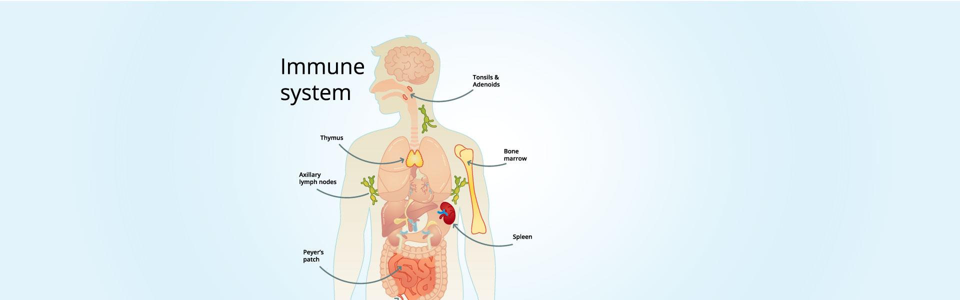 Nutrition & <br>Immunity